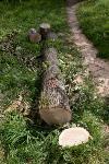 Мне нужнее: в тульском дворе подрядчик самовольно вырубил 15 ясеней и забрал их себе, Фото: 12