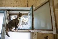 Волонтеры спасли кошек из адской квартиры, Фото: 32
