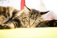 """Выставка """"Пряничные кошки"""". 15-16 августа 2015 года., Фото: 26"""