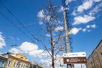 засохшие деревья на проспекте, Фото: 10