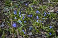 Весна 2020 в Туле: трели птиц и первые цветы, Фото: 39