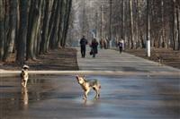 Преобразования в Центральном парке, Фото: 5
