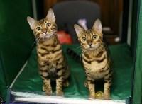 Выставка кошек, Фото: 5