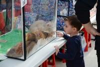 """Выставка """"Пряничные кошки"""" в ТРЦ """"Макси"""", Фото: 92"""