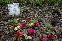Кладбище домашних животных в Туле, Фото: 52