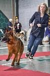 Выставка собак в Туле 26.01, Фото: 19