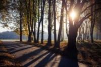 Центральный парк, утро, осень, Фото: 58