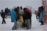 Куликово поле. Гонки на собачьих упряжках., Фото: 110