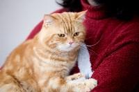 Выставка кошек. 4 и 5 апреля 2015 года в ГКЗ., Фото: 105
