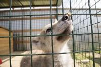 Зоопарк на набережной Упы в Туле, Фото: 21