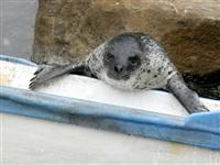 Жизнь тюленя: мечта!, Фото: 13