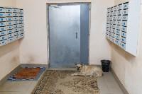 Собака Люся расплачивается за незаконно установленные батареи, Фото: 4
