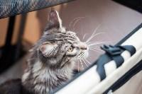 Выставка кошек в МАКСИ, Фото: 66