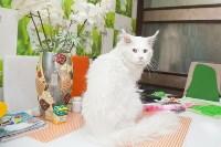 Советы ветеринаров: забота о здоровье питомцев осенью, Фото: 3
