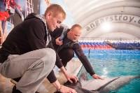 Дельфины, Фото: 7