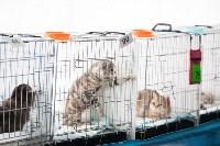 В Туле прошла выставка «Пряничные кошки» , Фото: 30