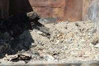 В Тульской области незаконно сжигали московский мусор, Фото: 22