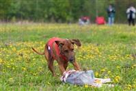 В Туле состоялись собачьи бега, Фото: 24