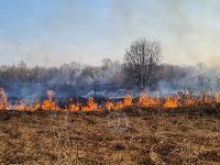 В Федоровке огонь с горящего поля едва не перекинулся на дома, Фото: 21