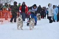 Праздник северных собак на Куликовом поле , Фото: 78
