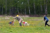 В Туле состоялись собачьи бега, Фото: 39