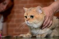 Выставка кошек в Искре, Фото: 73