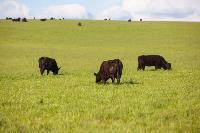 Тишина, солнце и бесконечный простор: 90 красивых фото с родины слонов – Одоевского района, Фото: 68