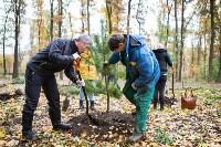 В Центральном парке Тулы появился сосновый бор «Слободы», Фото: 35