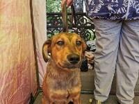 Фестиваль помощи животным в Центральном парке, Фото: 30