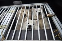 Праздник северных собак на Куликовом поле , Фото: 29
