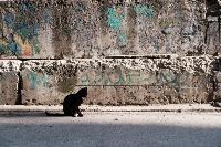 Тульские котики, Фото: 74