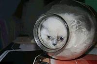 Жидкие коты, Фото: 9