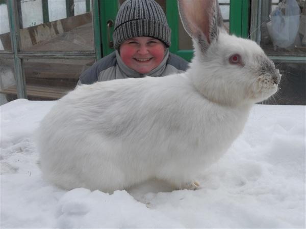наши кролики на даче