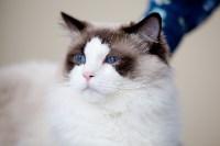 Выставка кошек. 4 и 5 апреля 2015 года в ГКЗ., Фото: 68