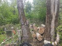 В Черни во время уборки на кладбище могилы завалили спиленными деревьями, Фото: 6
