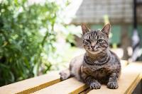Тульские котики, Фото: 57