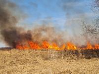 В Федоровке огонь с горящего поля едва не перекинулся на дома, Фото: 20