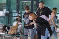 III благотворительный фестиваль помощи животным, Фото: 11