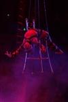 В Тульском цирке прошла премьера аква-шоу, Фото: 71