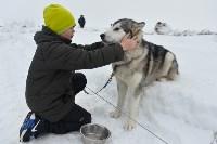 Праздник северных собак на Куликовом поле , Фото: 51