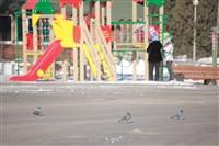 Улицы Тулы, 28 февраля 2014, Фото: 25