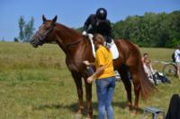 В Ясной поляне стартовал турнир по конному спорту, Фото: 83
