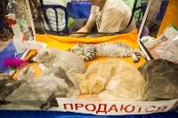"""Выставка """"Пряничные кошки"""". 15-16 августа 2015 года., Фото: 122"""