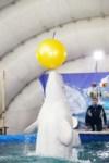 Дельфинарий в Туле, Фото: 17