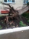 Ураган в Ефремовском районе, Фото: 5