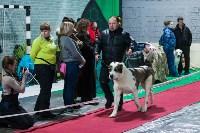 Выставка собак в Туле, Фото: 108