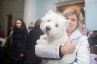 Всероссийская выставка собак 2017, Фото: 2