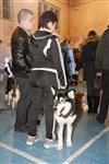 В Туле прошла всероссийская выставка собак, Фото: 43