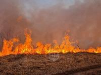 В Федоровке огонь с горящего поля едва не перекинулся на дома, Фото: 11