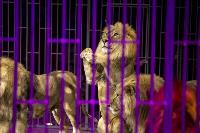 Шоу фонтанов «13 месяцев» в Тульском цирке – подарите себе и близким путевку в сказку!, Фото: 74